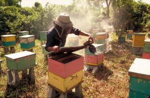 apiculteur_2